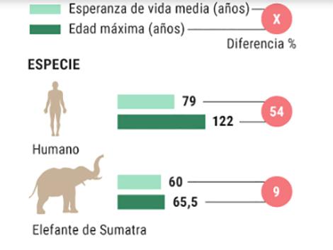 ¿Por qué una persona vive 80 años y una tortuga 200?