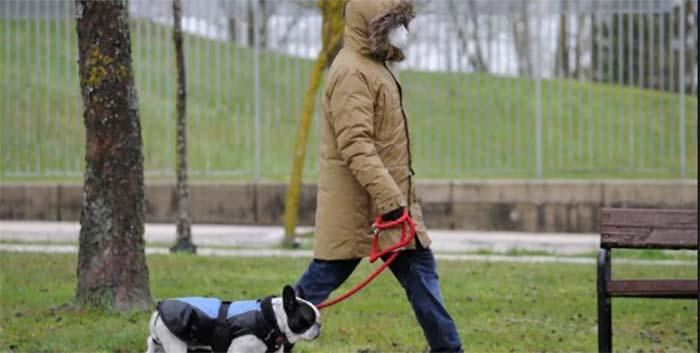 ¿Todo el mundo tiene perro? La pandemia, una tormenta perfecta