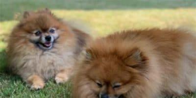 Ya hay más perros que niños menores de 14 en todas las comunidades autónomas