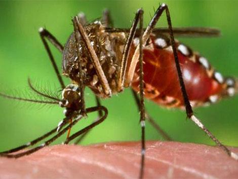 70. Enfermedad por el virus del Zika